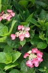 flower06252011sd15-01.jpg