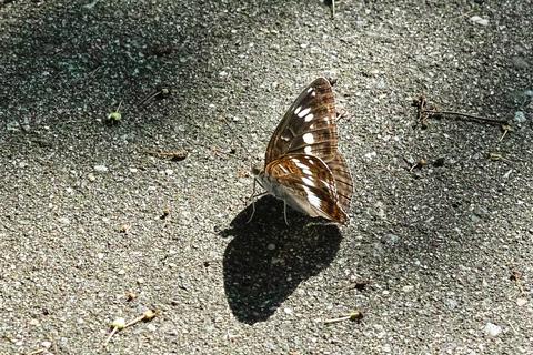 Butterfly08052013dp2m01trim02.jpg