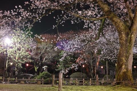 Cherry_blossom04132013dp2m02.jpg