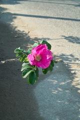 Flower05062012dp2-01.jpg