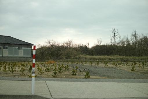 Landscape03012014dp2m03s.jpg