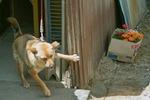 Mery06142008-02.jpg