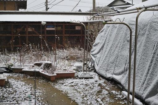 Snow02042014dp2m01s.jpg