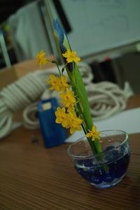 flower04272009-01dp2.jpg