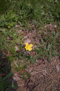 flower05162011dp1.jpg