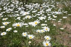 flower05242011dp1-01.jpg