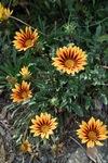 flower06112011dp2-01.jpg