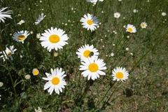 flower_and_Bug05242011dp1-02.jpg