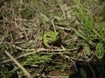 frog05042007-1.JPG