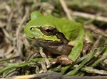 frog05042007-2.JPG