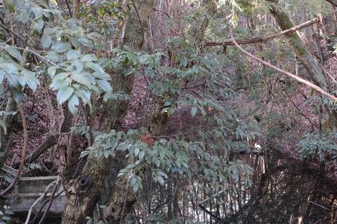 grove01312012dp2m.jpg