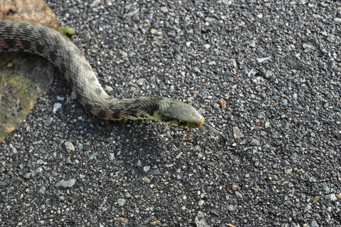snake11072012dp2m.jpg