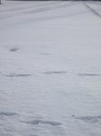 snow02132008.JPG