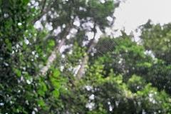spider07132012dp1x.jpg