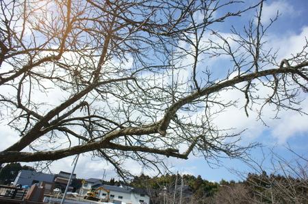 tree02152011nex5.JPG