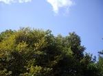 trees02212008-1.JPG